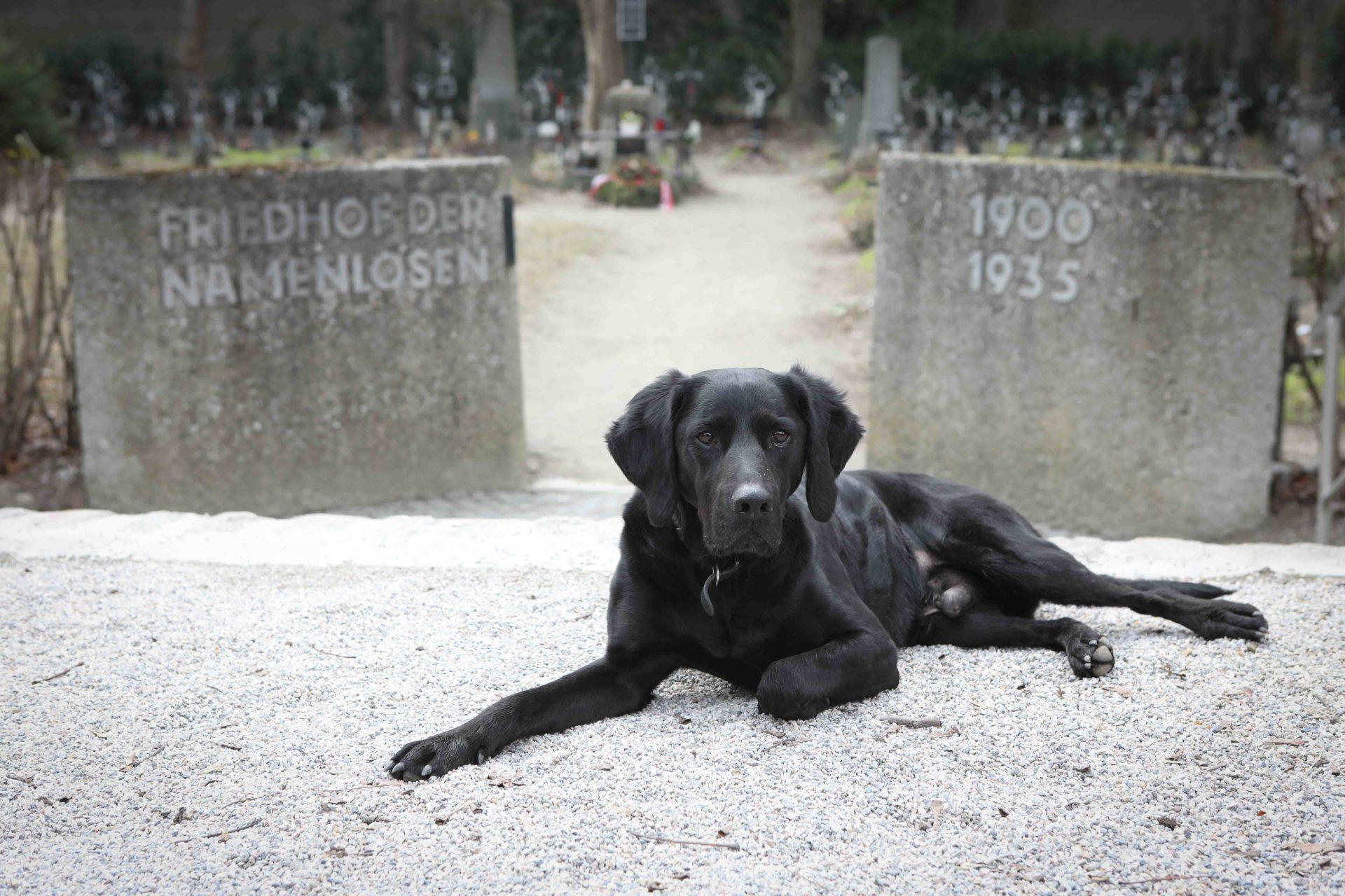 Herr Rossi ein Hund in Wien