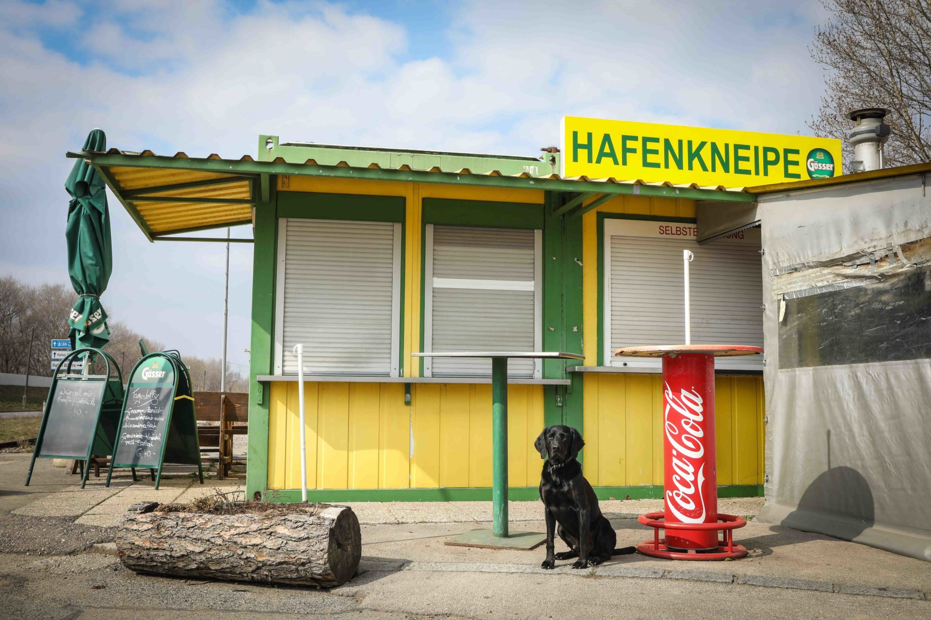 Rossi ein Hund in Wien