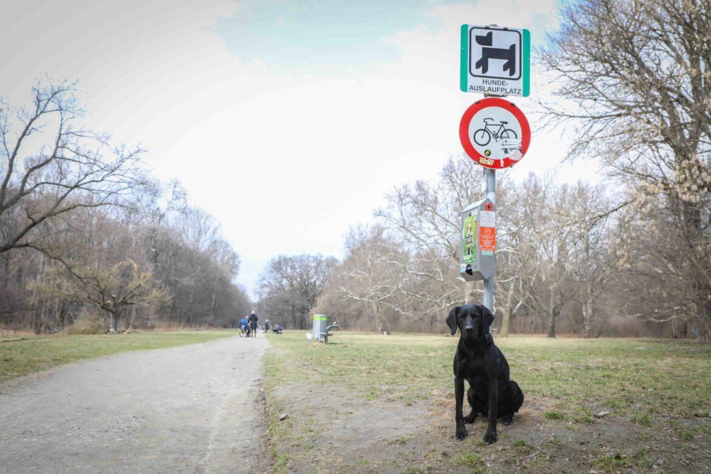 Prater, Hundeauslaufzone Wien