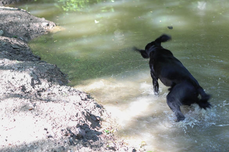 Hund im Wasser, badet