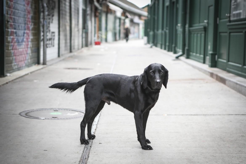 Hund in Wien, Naschmarkt