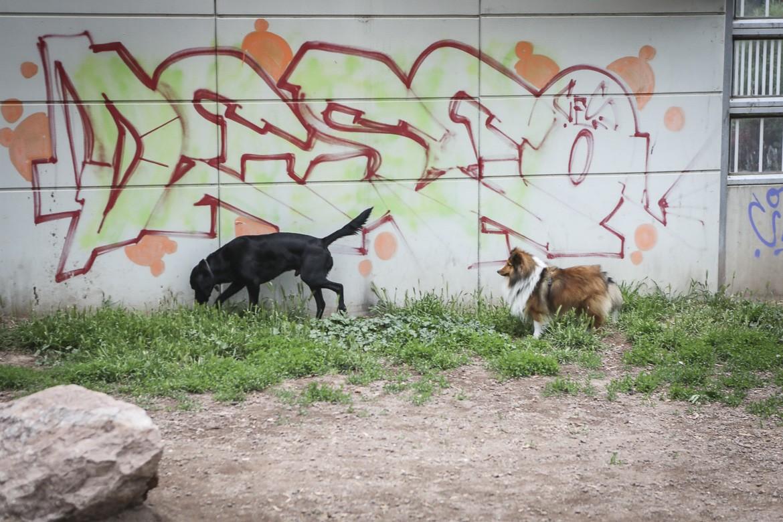 HErr Rossi, Hund in Wien, Hundeplatz