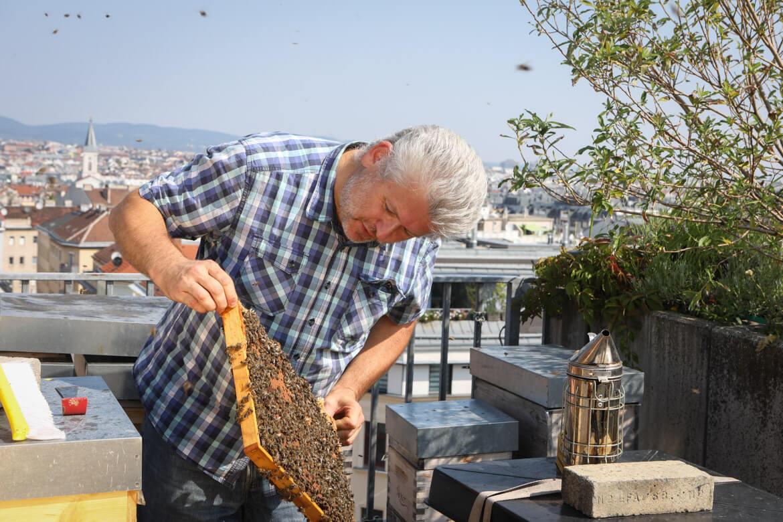 KOpetzky, Stadtimker, Imker, Stadhonig, Honig, Bienenbeute, Wirtschaftsforensiker, madamewien