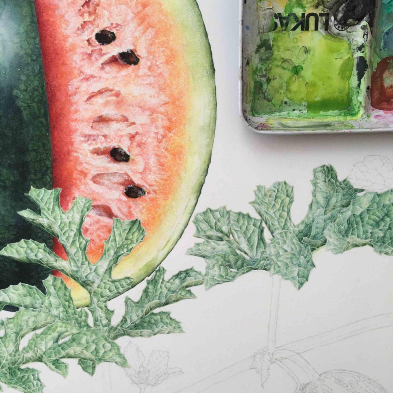botanik,botanische illustration,  madamewien